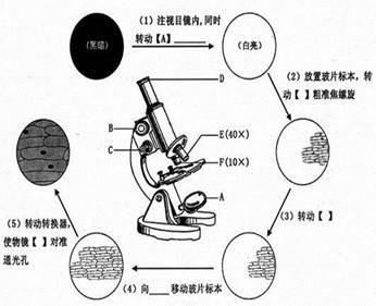 初中生物练习使用显微镜试题列表-初中生物观察细胞的