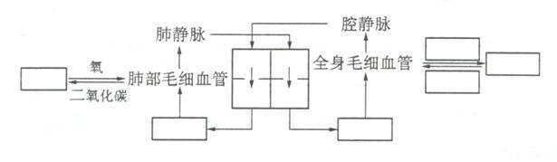 下图表示血液循环途径示意图,在方框内填上适当的名称