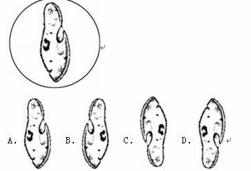 显微镜下观察到草履虫图象,则草履虫在临时装片上的状态
