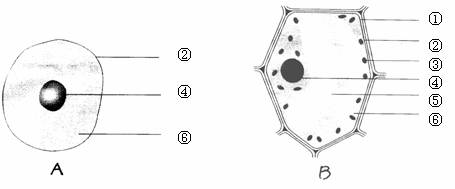 下图是植物细胞和动物细胞的结构示意图
