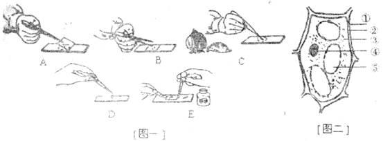 初中生物练习使用显微镜试题列表-初中生物观察细胞