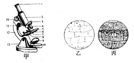 下图是显微镜的结构示意图及观察洋葱表皮细胞时遇到