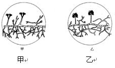 右图为显微镜下看到的两种霉菌结构示意图 请写出两种霉菌的名称 甲